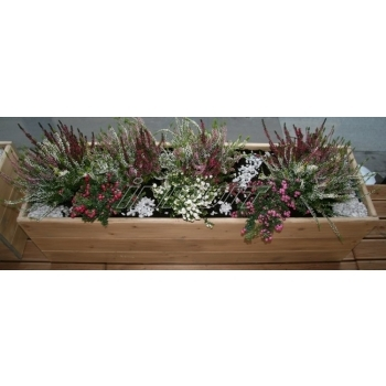 lillekast-lillekastide müük-lillekastid-immutatud-gardening.JPG